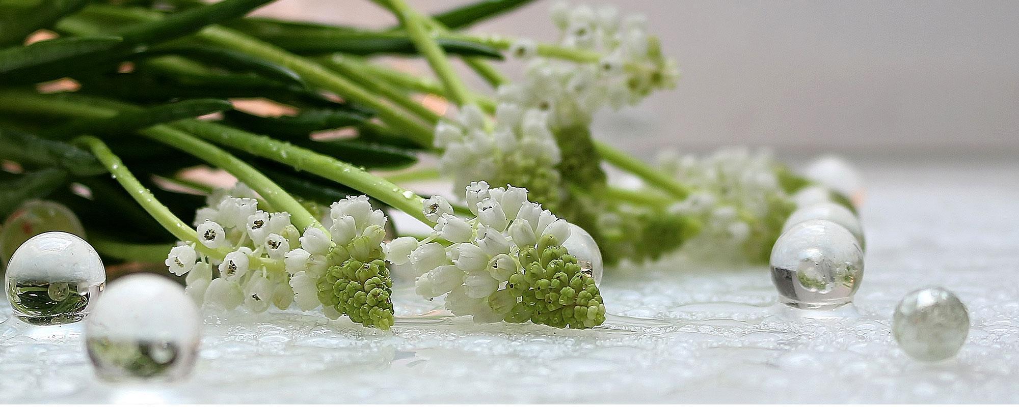Witte druifjes